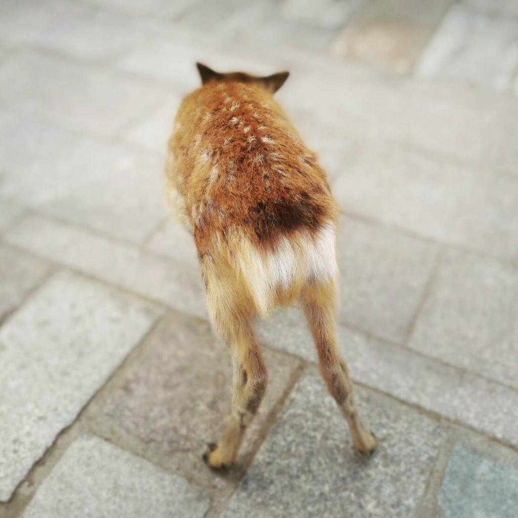 子鹿のおしり