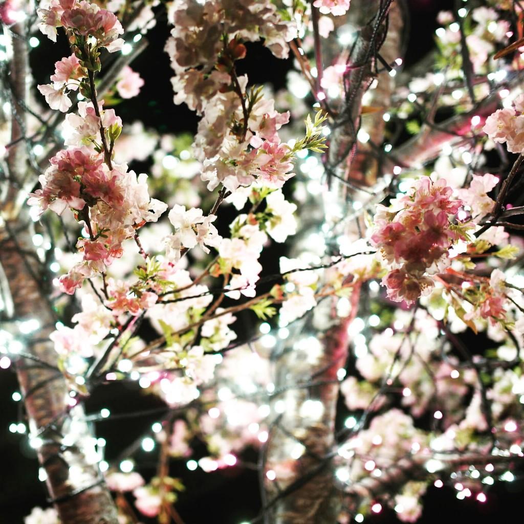 桜 なら瑠璃絵