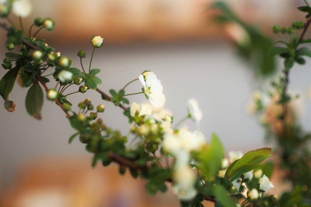 お花は暮らしを豊かにしてくれますね。香り椿が届きました。